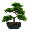 Europalms ananász bonsai, 50cm 82600110