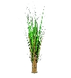 Europalms fox grass, 150cm    82600141